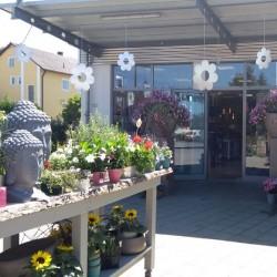 Floristik & Ambiente